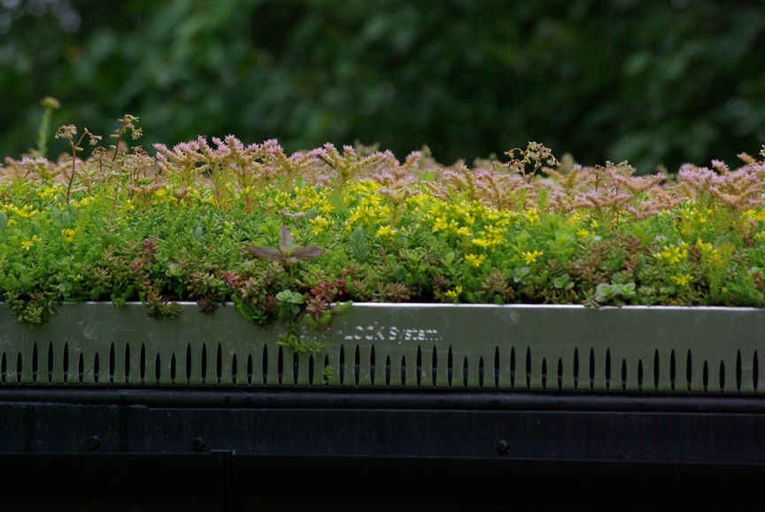 Sedum & Wildflower Green Roof